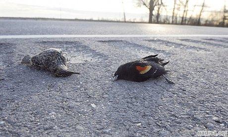 Предвесники катастрофы. Смерть животных в США и провалы земли