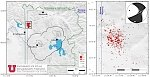 Yellowstone volcano: Elevated earthquake activity during June 2017