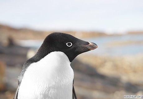 Лед и климат: почему Антарктида сопротивляется глобальному потеплению