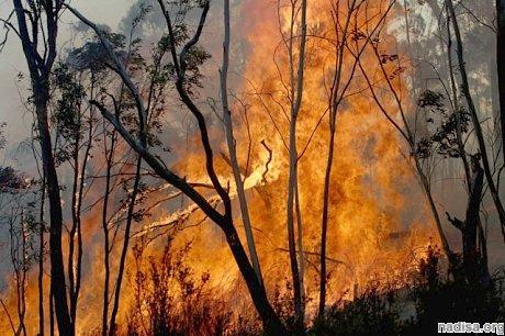 Австралийская катастрофа: как пожары генерируют сами себя
