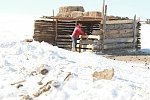 Mongolia in the grip of one of its most extreme winters on record